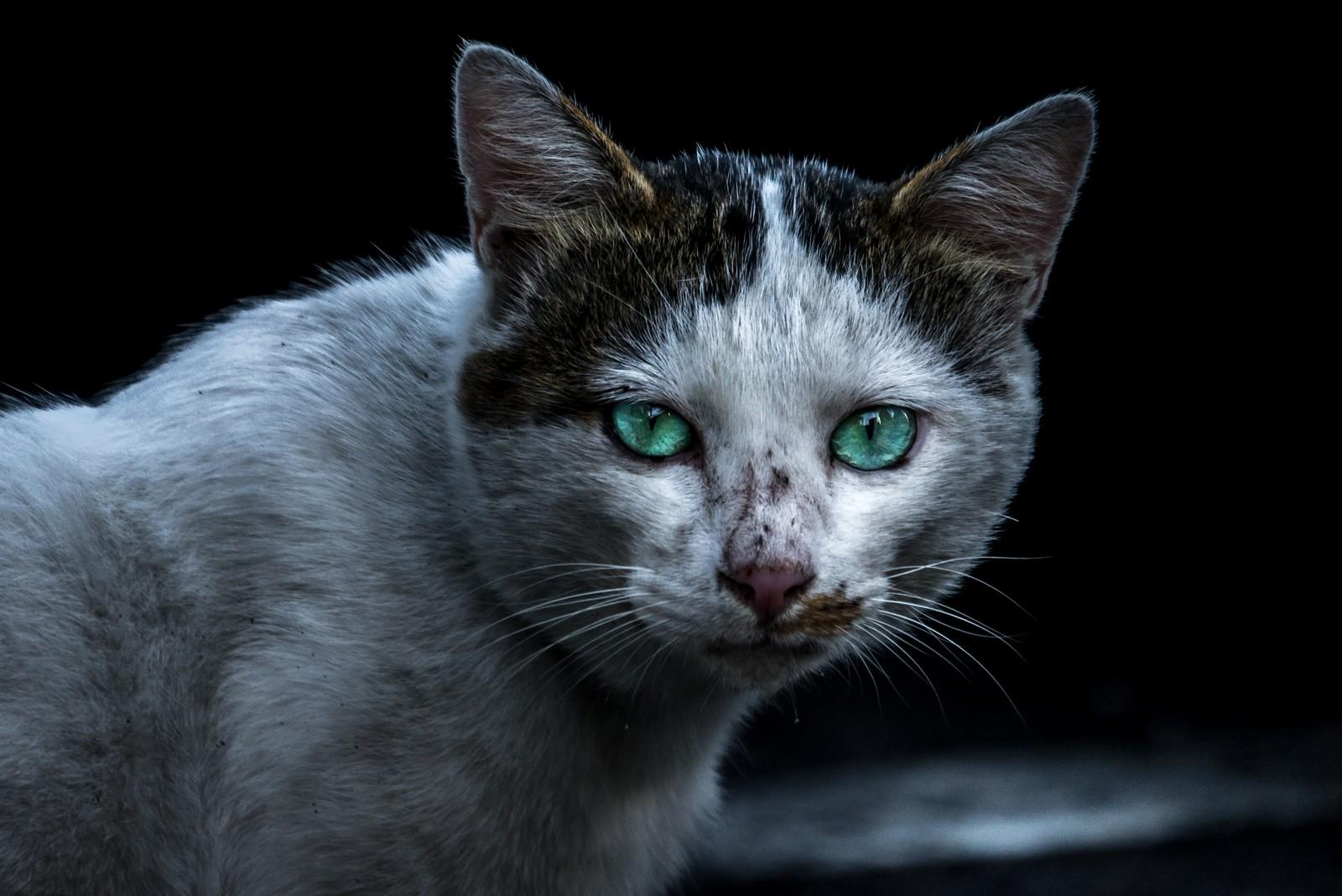 こっちを見てる猫