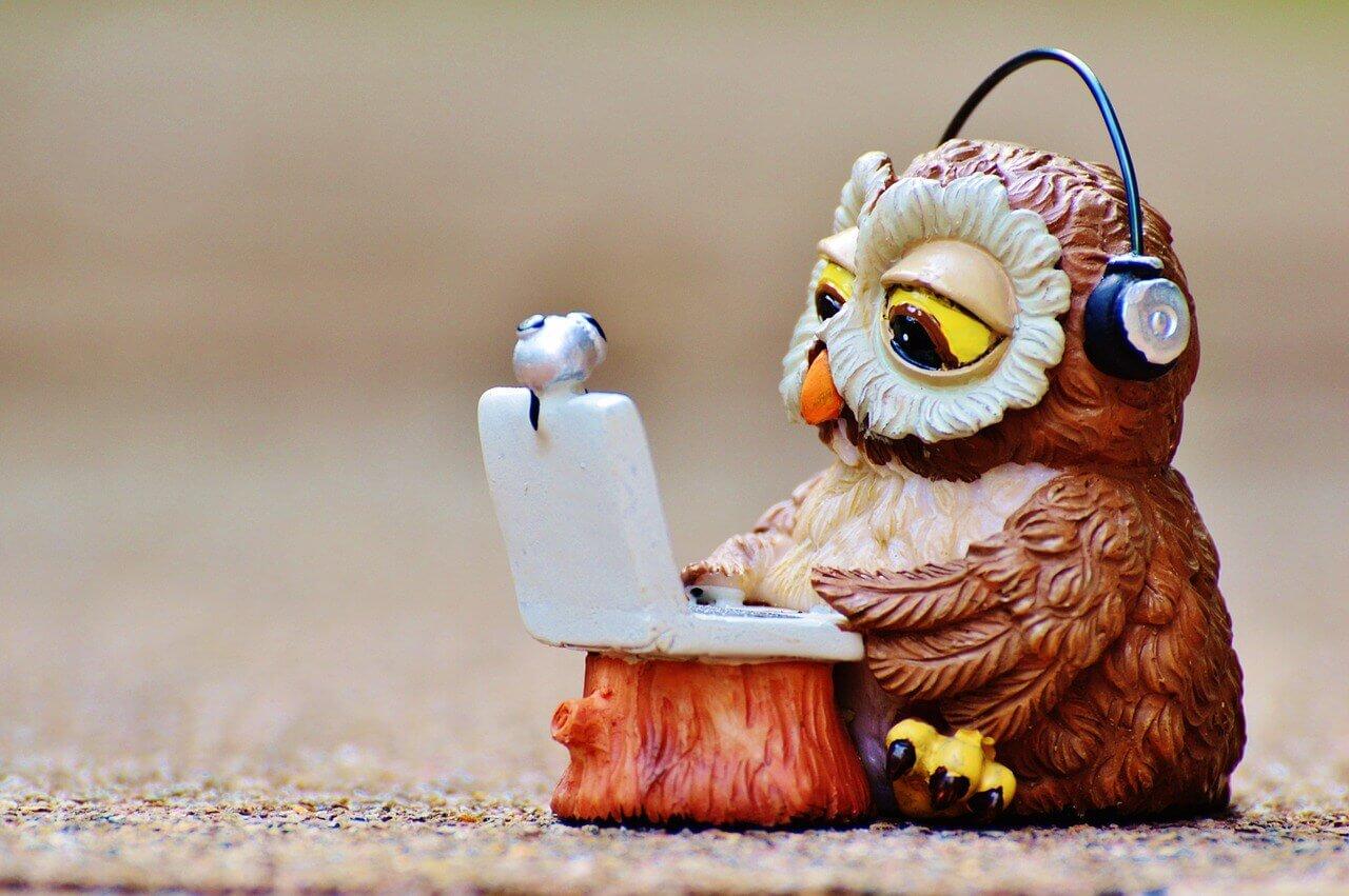 PCを見るフクロウ
